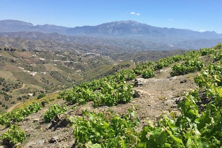 Hochlage in Málaga, mediterranes Klima in Spanien