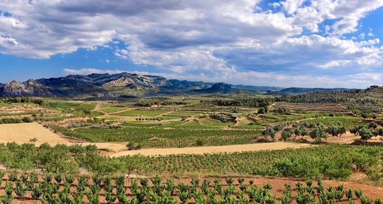 Weinlandschaft in Terra Alta