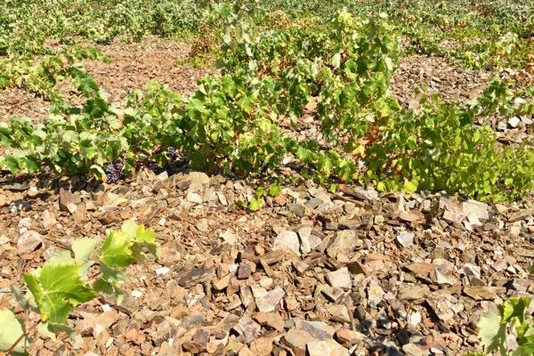 Schieferböden in Málaga. Mehr Mineralität im Wein?