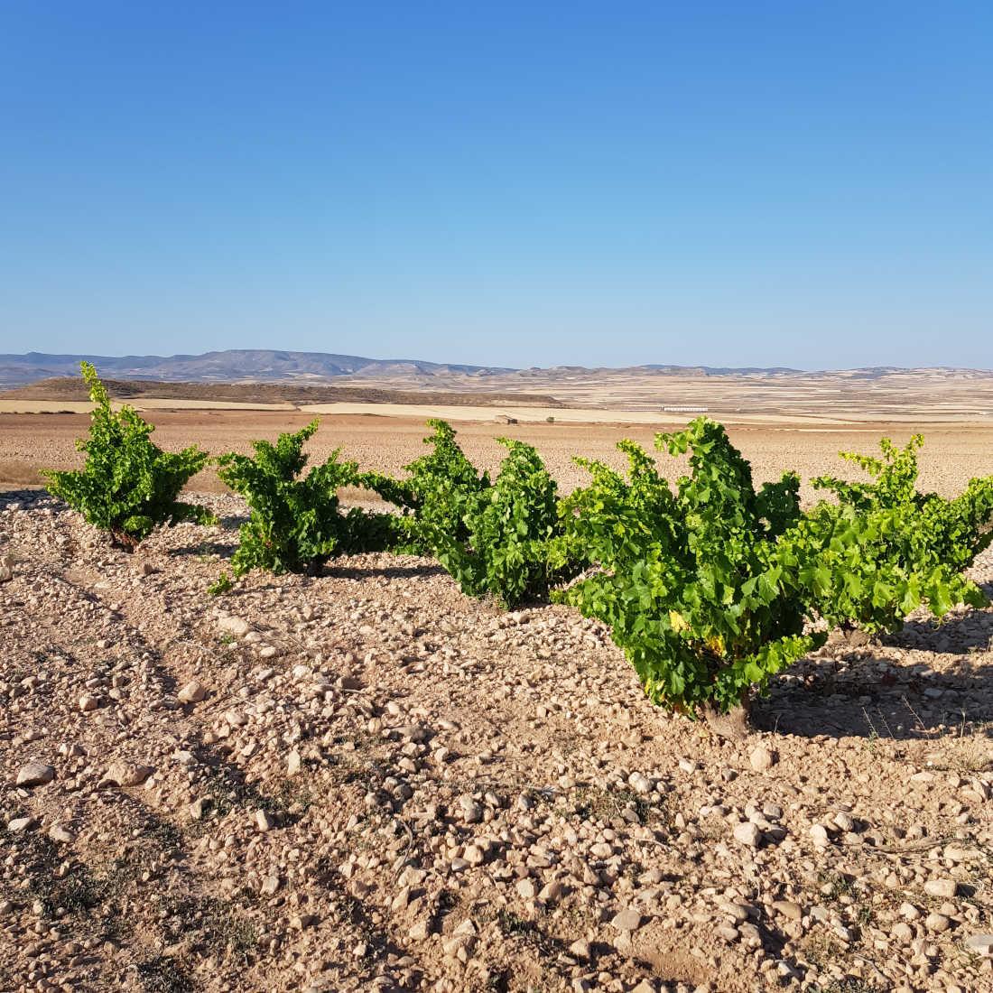 Weinberge in Aragon Bodegas Tempore